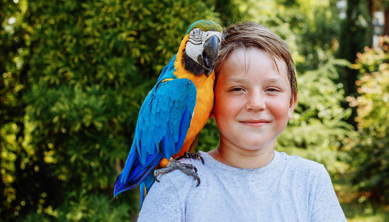 Keep Your Parrot Happy